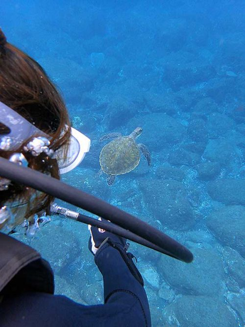 ウミガメ見ながらちょっと一緒に泳いでみたり