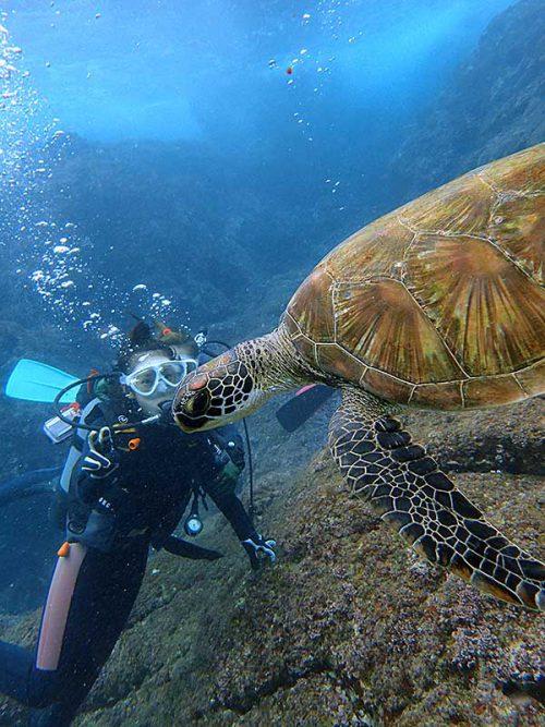 近くを横切るアオウミガメ