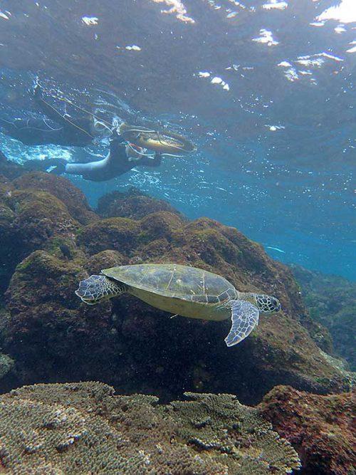 少し泳げばすぐにウミガメ見かけたり