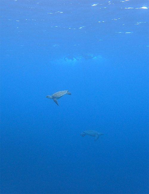 沖を周ってウミガメ見たり