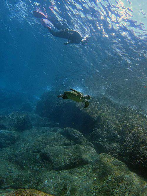 上から泳ぐウミガメ眺め