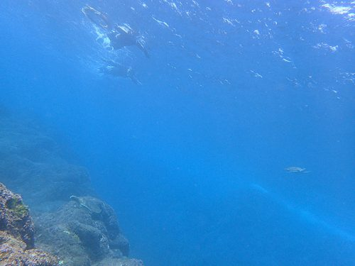 浅場を周ればウミガメたくさん見かけたり