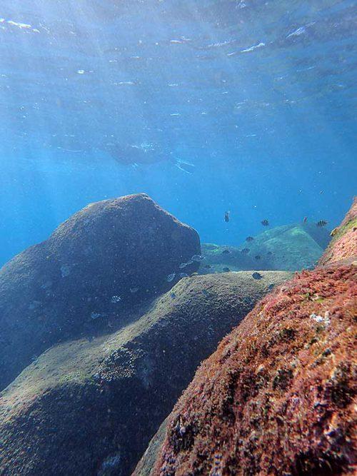 集まる魚達をのんびり眺め