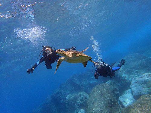 潜ってすぐに小さいウミガメ見つけたり