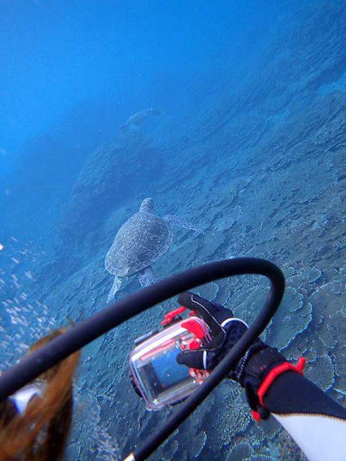 ウミガメ見ながら潜っていって