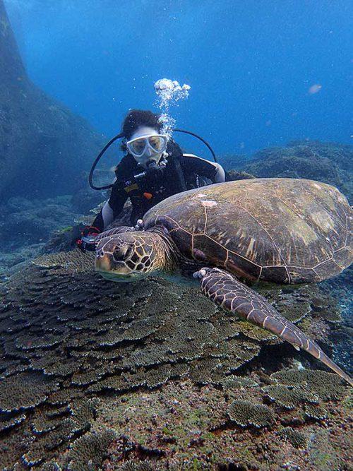 ウミガメと一緒に少し泳いでみたりもして
