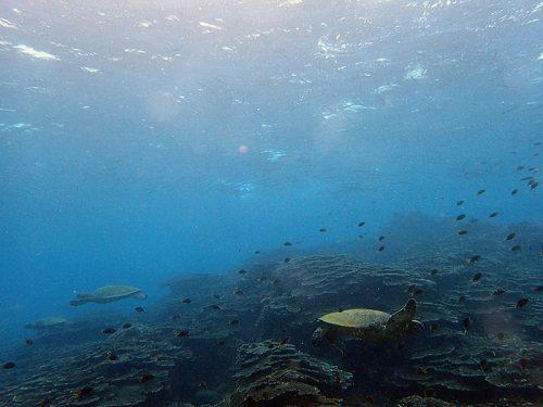 今日もウミガメたくさんいたり