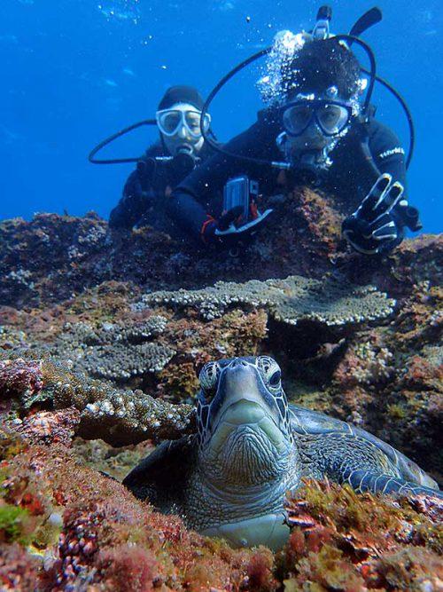 根上で休憩していたちっこいウミガメ