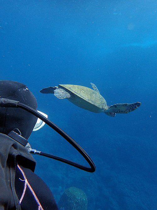 ウミガメと一緒にちょろっと泳いでみたりして