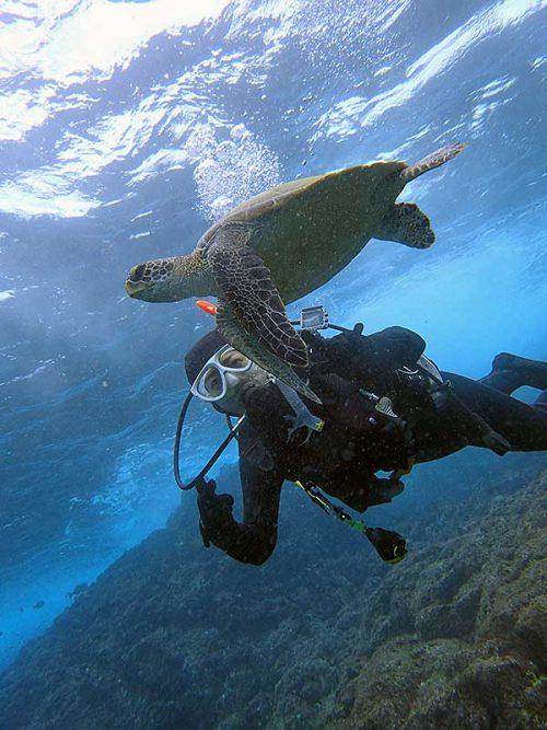 ちょっと近くでウミガメ見たり
