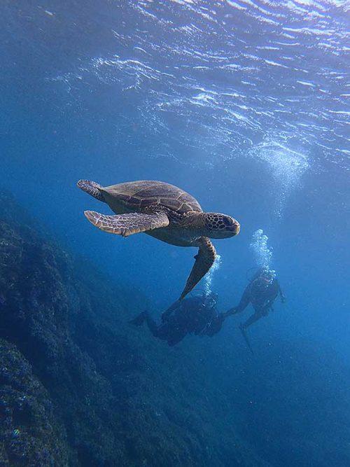 ウミガメ見つつ沖にでて