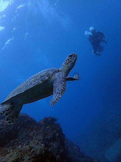 ウミガメ見つつ沖まで泳ぎ