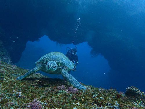 アーチとウミウガメ
