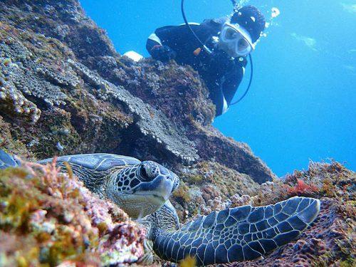 根上で休憩中のちっこいウミガメ