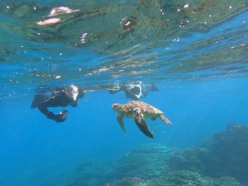 目の前ウミガメ泳いで来たり