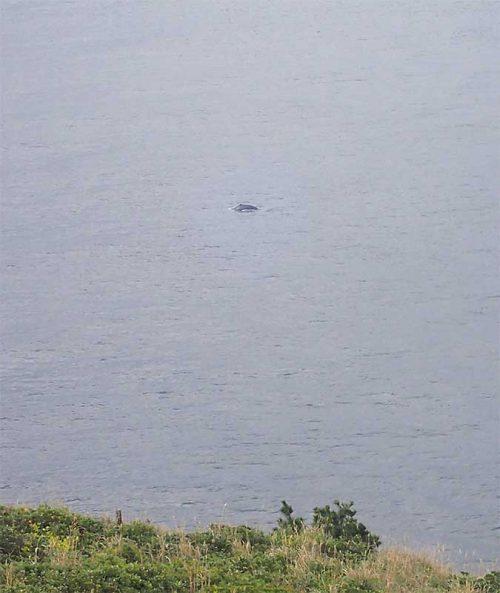 ポコッとクジラ