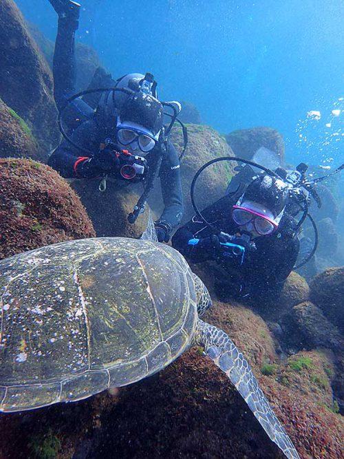 潜ってすぐにウミガメ撮って