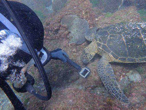 ウミガメの食事風景撮ったり見たり