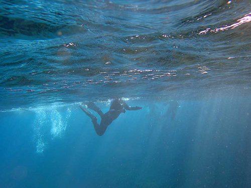 水面近くには白っぽくて小さい魚達