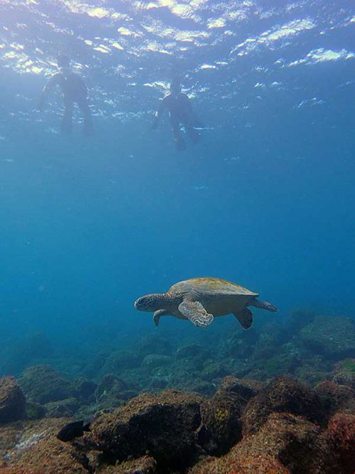 上がる前にもウミガメ見つつ