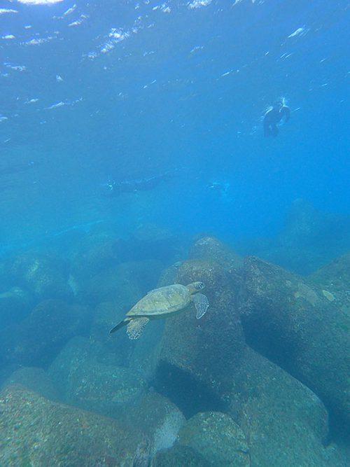 ウミガメ上から見てみたり