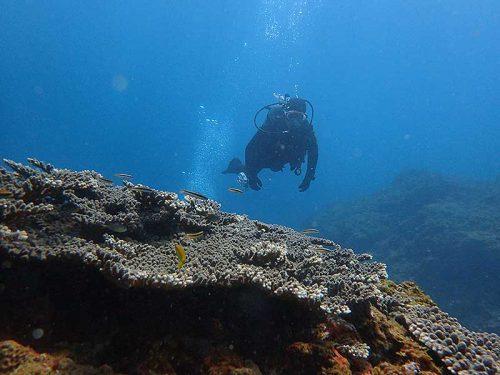 サンゴの上にはコガシラベラとか