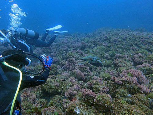 水底付近で休憩してたちっこいウミガメ
