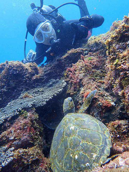 隙間で休む小さいウミガメ