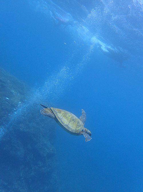 沖出てウミガメと一緒にちょっと泳いでみたりもして