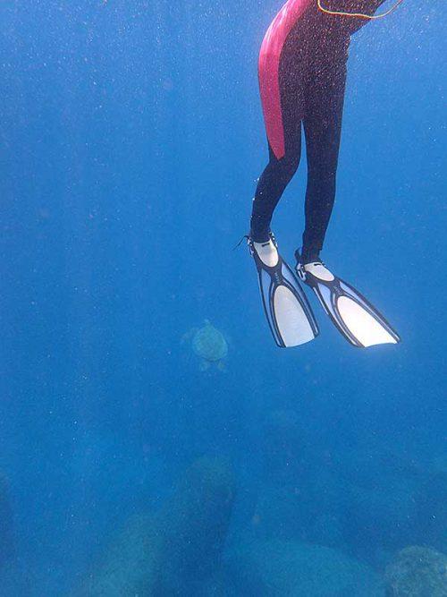 後ろの方をウミガメ泳いで通って行ってたり