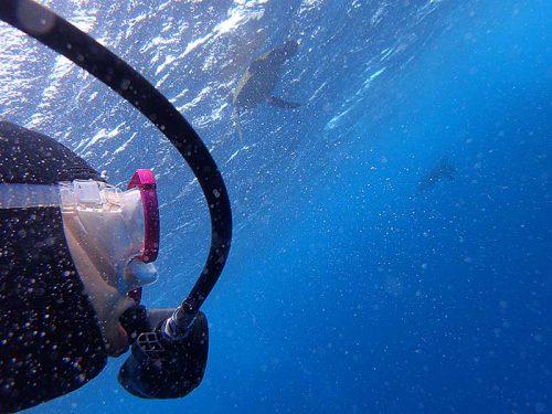 呼吸しに水面付近に上がっていってたアオウミガメ達