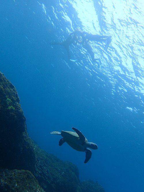 みんなでウミガメ上から眺め