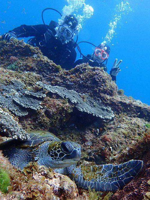 隙間で休むウミガメ眺め