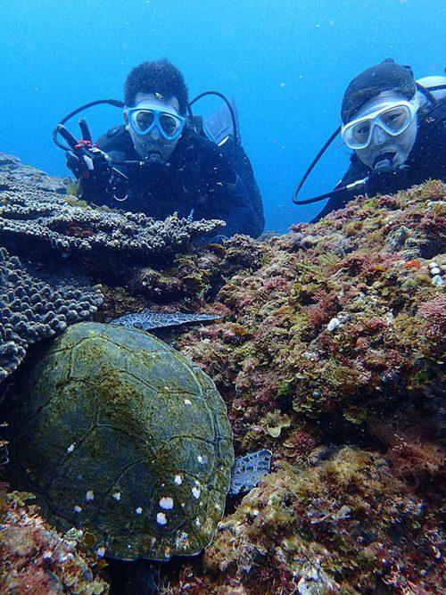 サンゴの下に頭突っ込んで休んでたアオウミガメ