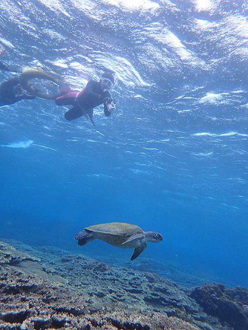 ちょっと沖まで行けばウミガメたくさんおりまして