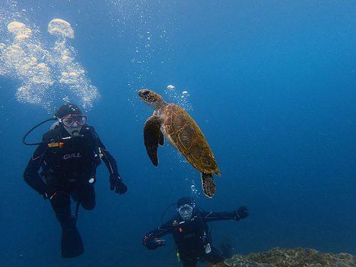 呼吸しに上がっていってたちっこいウミガメ