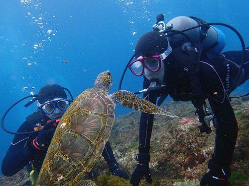 間近でウミガメ見てみたり