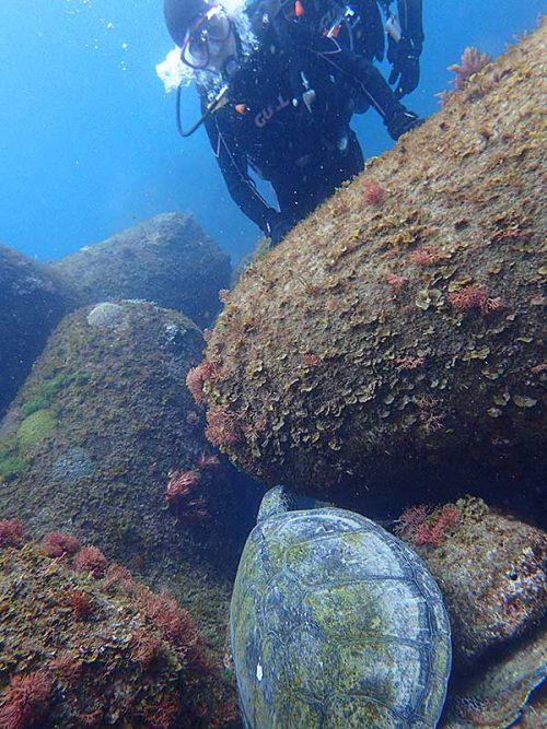 岩の隙間で休憩していたウミガメ見たり