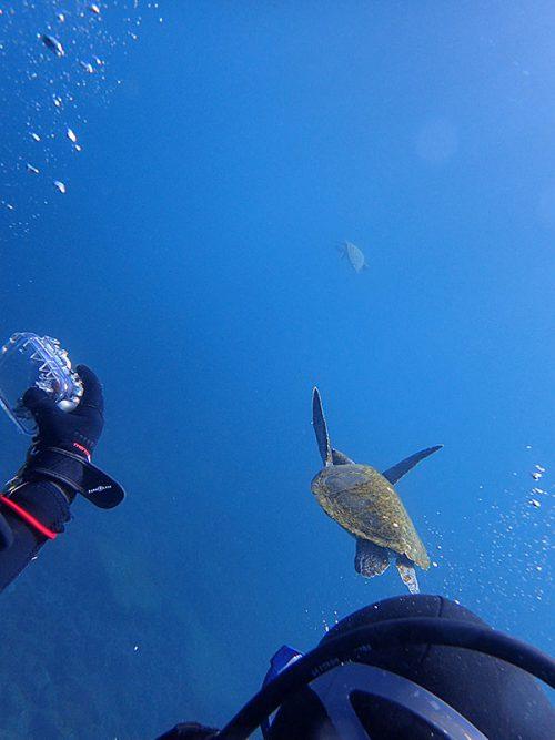 カメと一緒に泳いで行くと、前にもウミガメおりまして