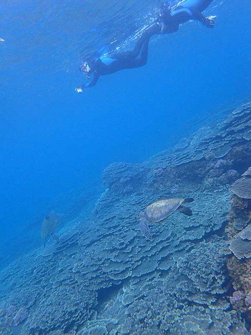 ウミガメ達が集まってところも見て周り