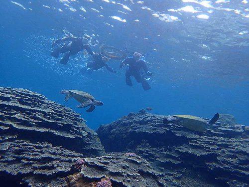 サンゴのところに集まるウミガメ見て周り