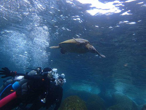 水面付近でのんびりしてたウミガメ見たり