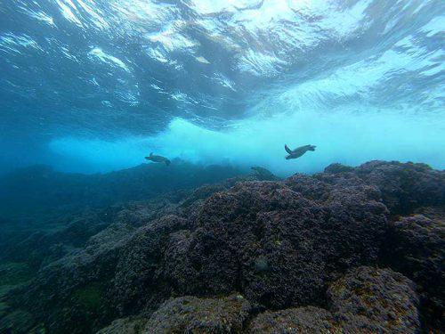 浅場にちっこいウミガメたくさん