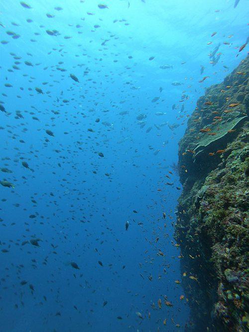潮もかかって魚もたくさん出てきてて