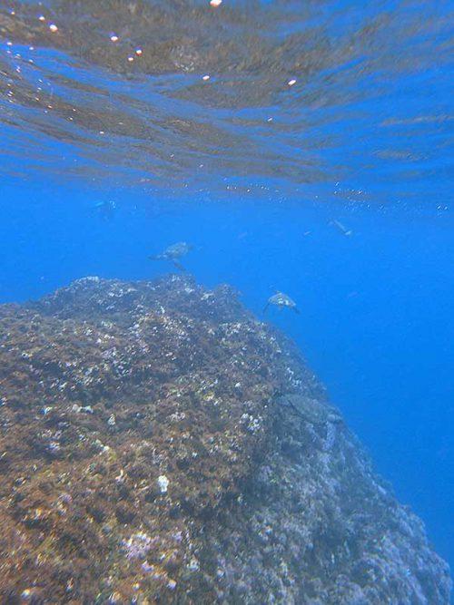 たくさん集まるウミガメ達も見て周り