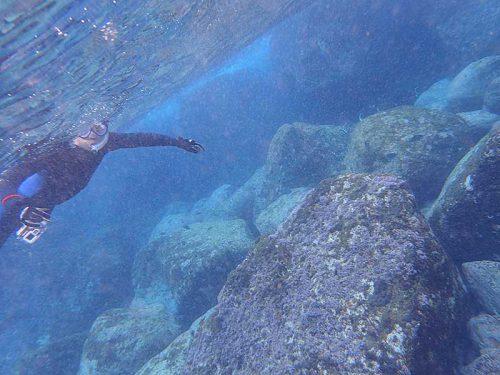 ツノダシとか見ながら泳いで行って