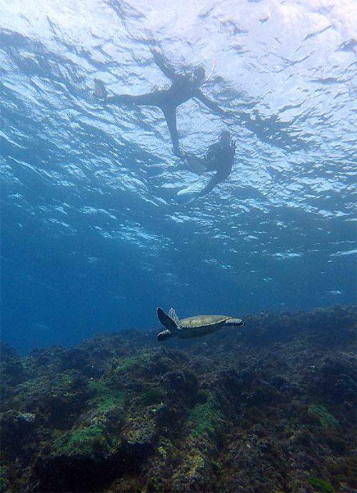 上からウミガメのんびり眺め