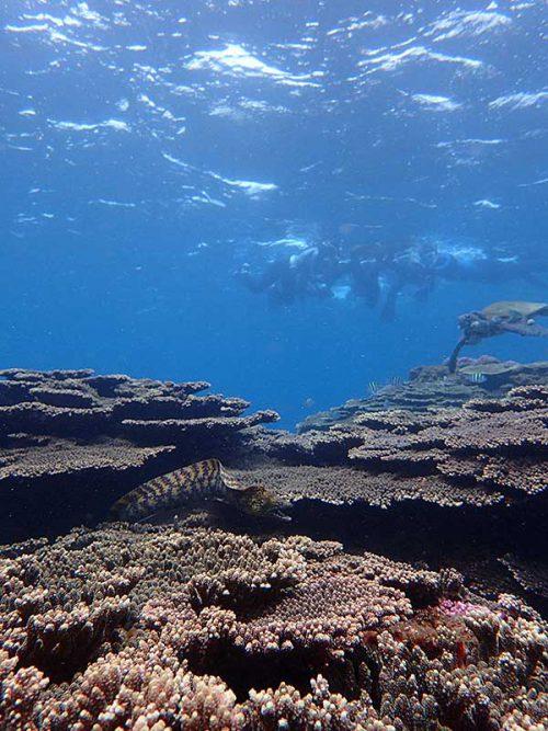 サンゴの間からウツボも出てきていたり