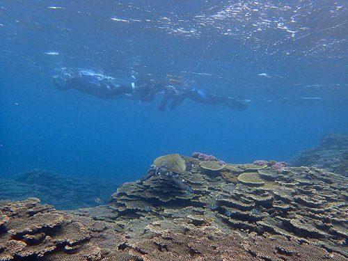 アオウミガメとオヤビッチャ
