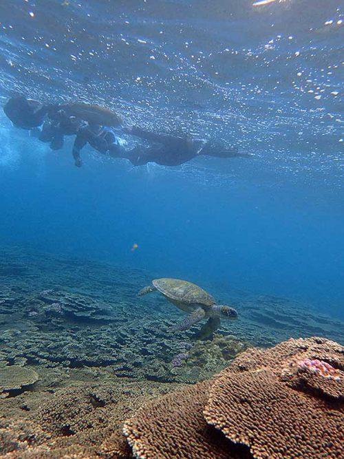 少し泳げばウミガメ泳いでおりまして